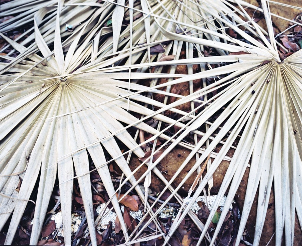 Lost Boats. Detail : Dry Leaves. 2012. C-Print. 80X100cm